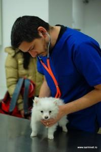 consultatie veterinar